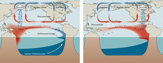 Abb. 3.30: Für gewöhnlich treiben stetige Passatwinde das Wasser von der Küste Südamerikas auf den Pazifik hinaus. Dadurch steigt vor Südamerika kaltes und nährstoffreiches Tiefenwasser auf. Während eines El-Niño-Ereignisses schwächen sich die Winde ab, sodass jetzt warmes Wasser Richtung Amerika strömt. © maribus