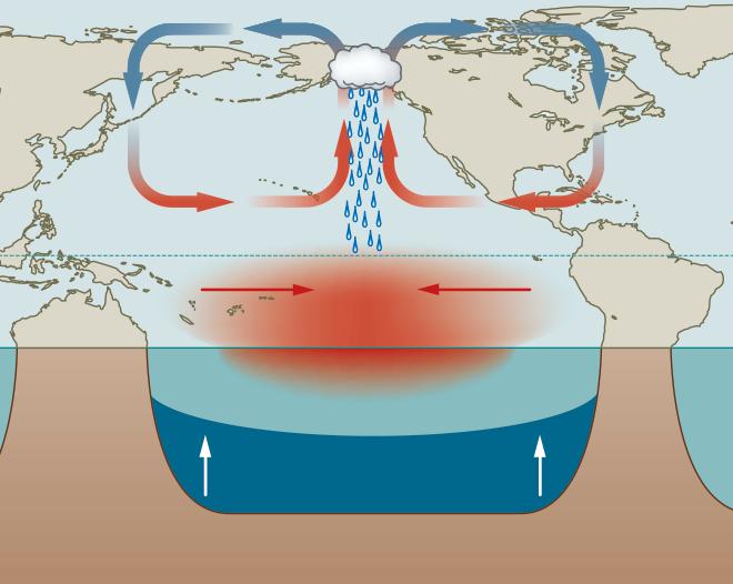 Abb. 3.32: Beim seltenen Phänomen El Niño Modoki strömt der Wind aus West und Ost zum Tiefdruckgebiet im zentralen Pazifik. © maribus